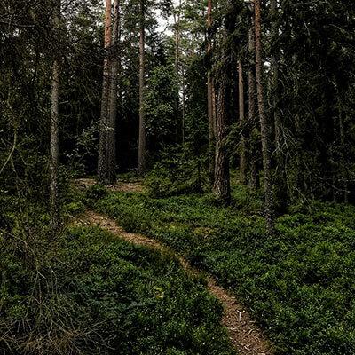 Plankgolv från en egen skog
